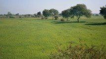 3 ways to optimise India's land usage for renewable energy ambitions